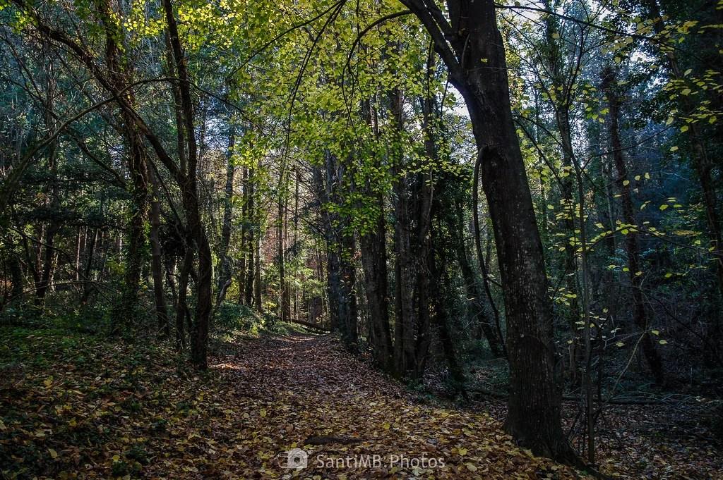 Ruido de hojas