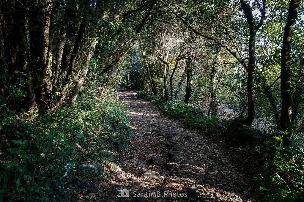 Hacia lo profundo del bosque
