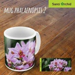 mug phalaenopsis 2