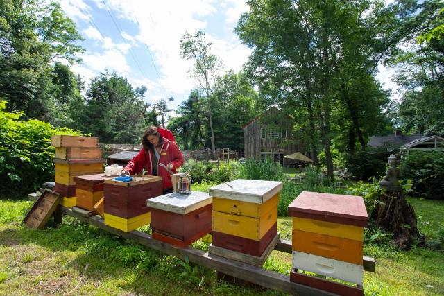 'Honey Sommelier' To Talk About Becoming An Accidental Beekeeper