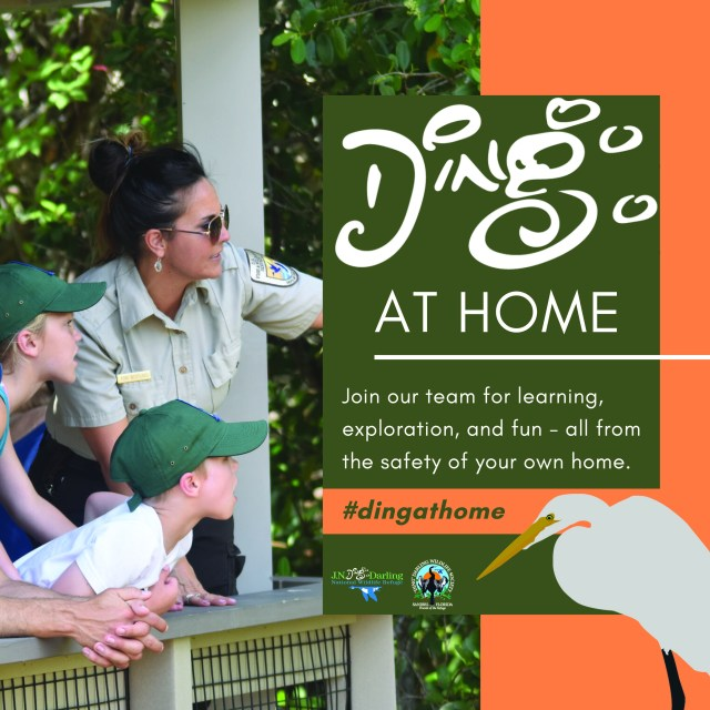 'Ding' Darling Refuge Debuts #DingAtHome Digital Engagement