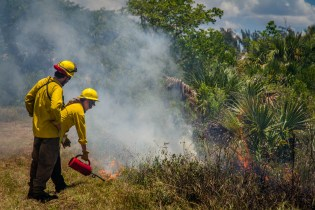 A controlled burn at Sanibel Gardens in 2018. SC file photo