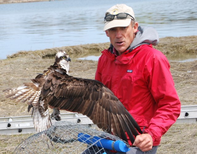 Audubon, Osprey Foundation Presenting Revival of Global Raptor