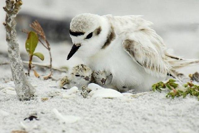 Sea Turtles, Shorebirds Prepared for Rain