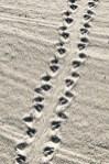 turtle tracks edited