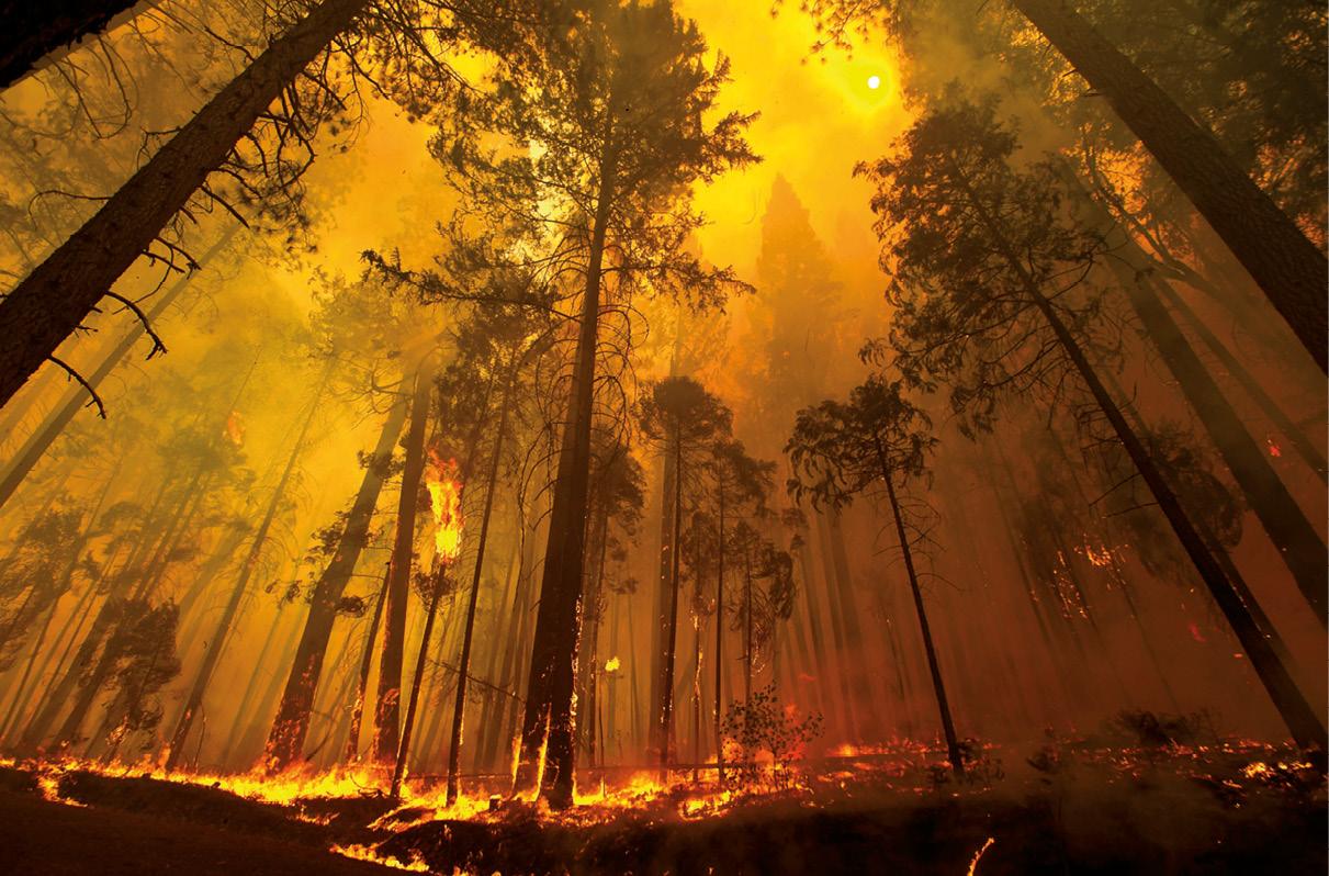 Quando o fogo destrói a vida