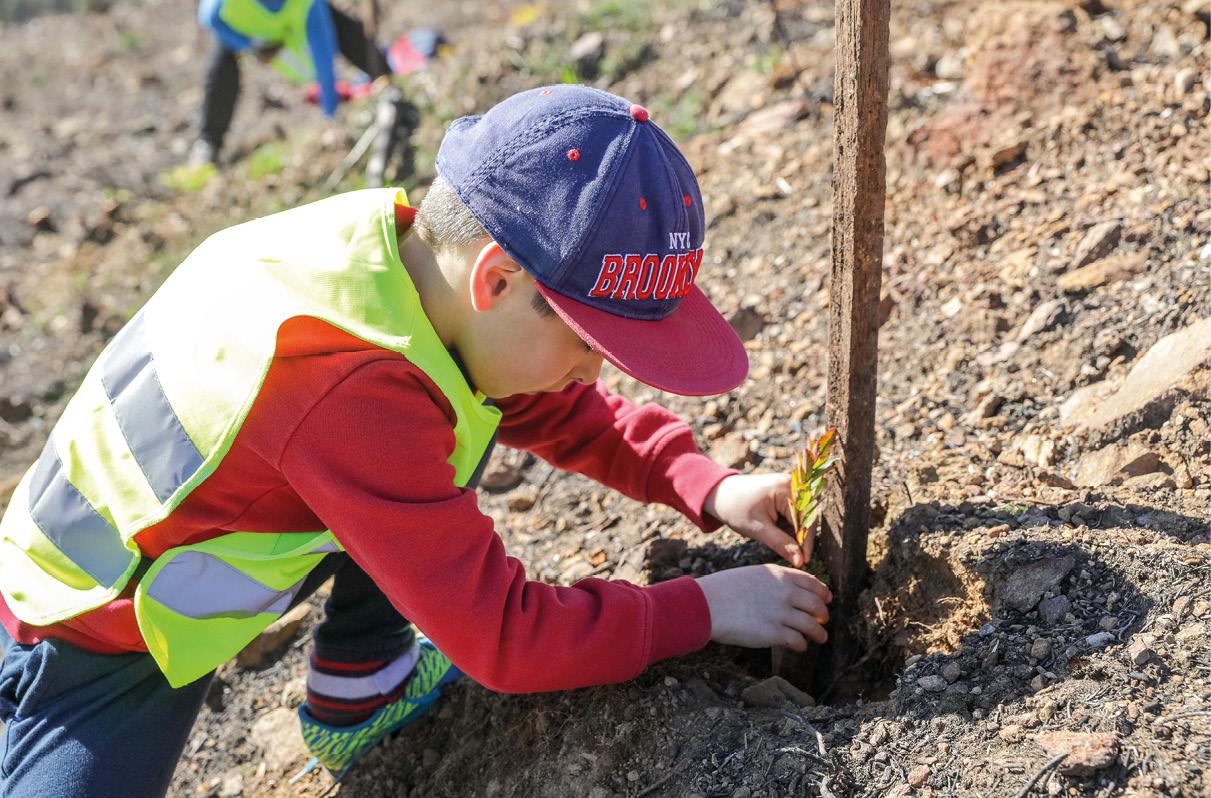 Uma criança participa na ação de reflorestação no monte de São Marcos, em Tondela, 21 de fevereiro de 2018. A ação de reflorestação conta com cerca de três mil árvores (pinheiro manso e medronheiro), abrange uma área com cerca de 2,5 hectares e conta com a participação de alunos do 1.º ciclo do Centro Escolar de Campo de Besteiros. PAULO NOVAIS/LUSA
