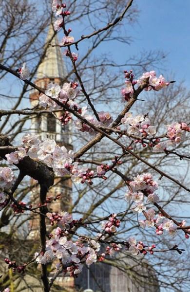 Primavera em Pádua, Basílica do Santo