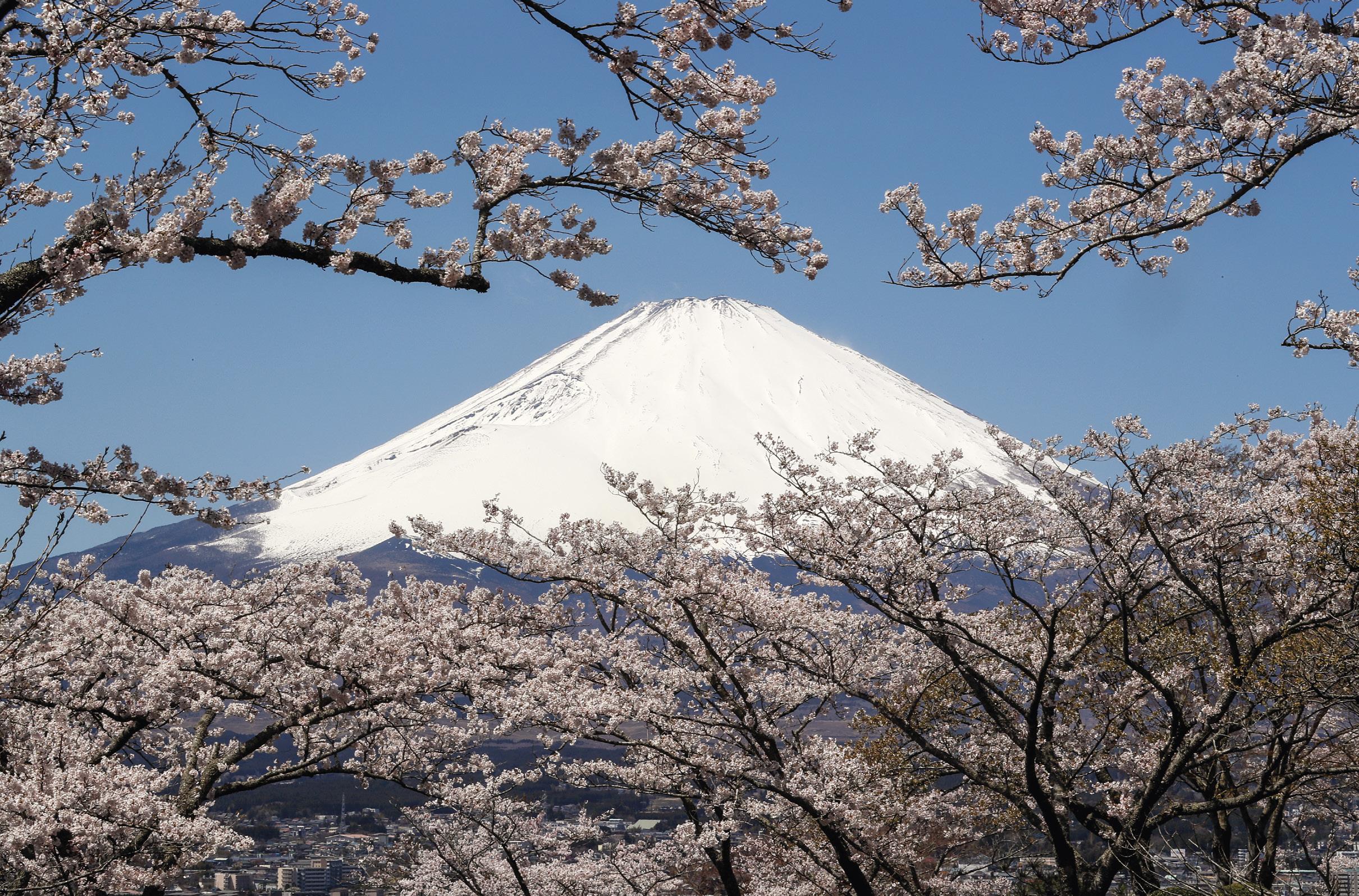 Flores de cerejeira em plena floração. Ao fundo o Monte Fugi, o pico mais alto do Japão. Abril 2019. EPA/KIMIMASA MAYAMA.