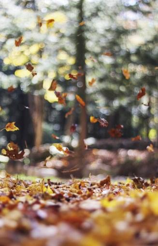 Foto: Autumn Mott Rodeheaver | Unsplash.