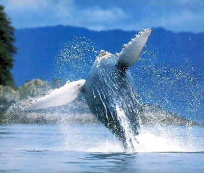 Things to do in Las Terrenas-Whale Watching