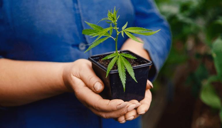 Argentina-legaliza-uso-da-maconha-768x444
