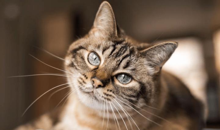 aplicativo-Meow-Talk-traduz-miau-do-seu-gato-768x444