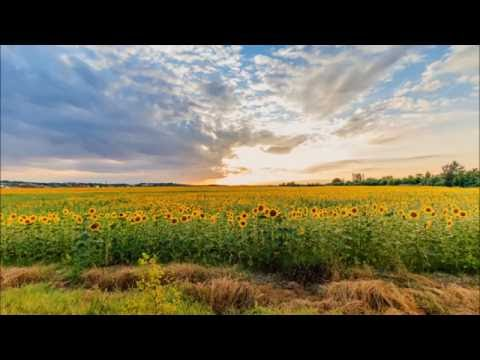 ジブリアニメ『千と千尋の神隠し』サウンドトラックより「あの夏へ」