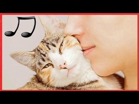 落ち着きのない猫をリラックスして眠りに設計された猫の音楽 【CATS MUSIC BGM平成29