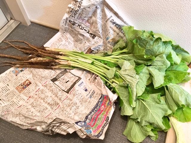 香川の「葉ごぼう」!今が旬の野菜です。