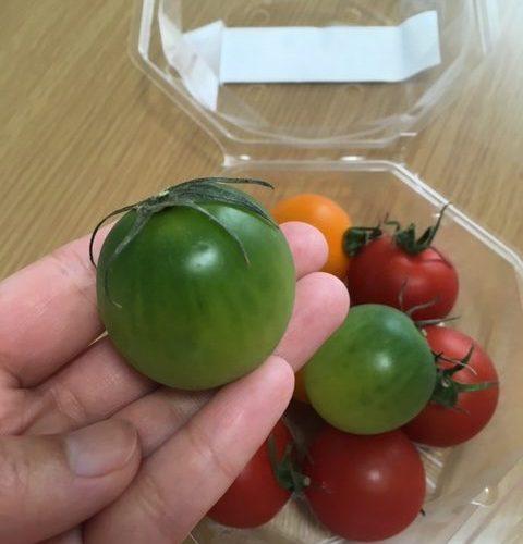 「電気屋さんのつくったカラフルトマト」が大玉で超ジューシー!!特に緑のトマトは緑色で完熟していることに驚きでした。