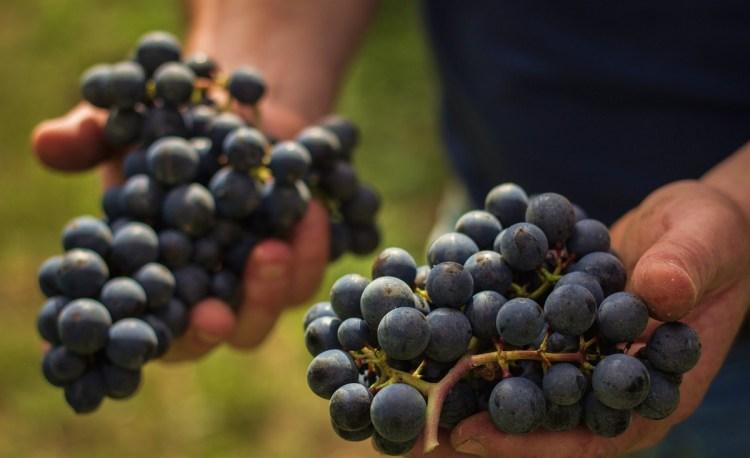 vinicola suzin 2