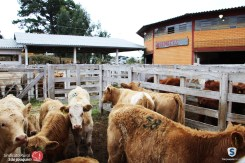 Sindicato Rural_2018 (41)