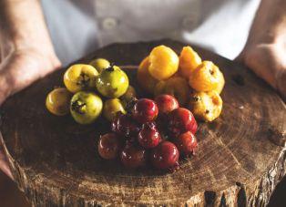 Frutos da Mata Atlantica Foto Vanessa Alves
