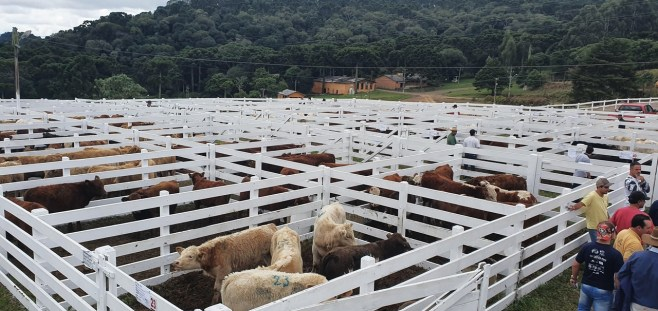 Sindicato Rural 2019 - Feira (38)