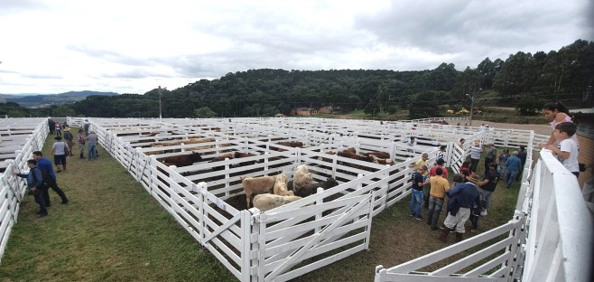 Sindicato Rural 2019 - Feira (39)
