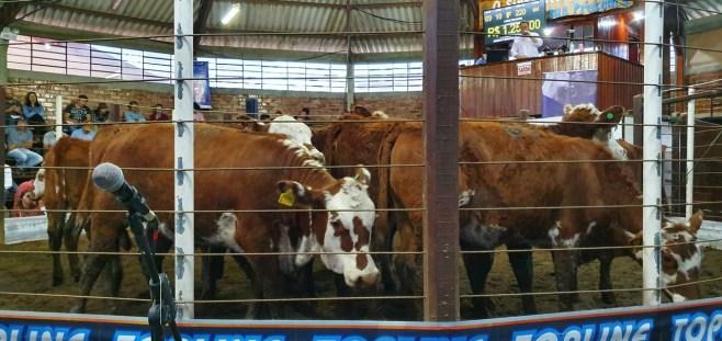 Sindicato Rural 2019 - Feira (44)