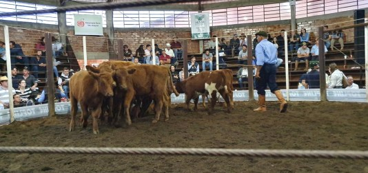 Sindicato Rural 2019 - Feira (45)