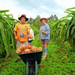 familia_rocha_de_maracaja_trocou_a_producao_de_fumo_pelo_cultivo_organico_de_pitaia_20210618_1332413307.jpeg