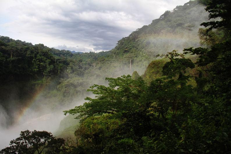 Photo prise dans le cadre du projet du centre de savoir au Cameroun