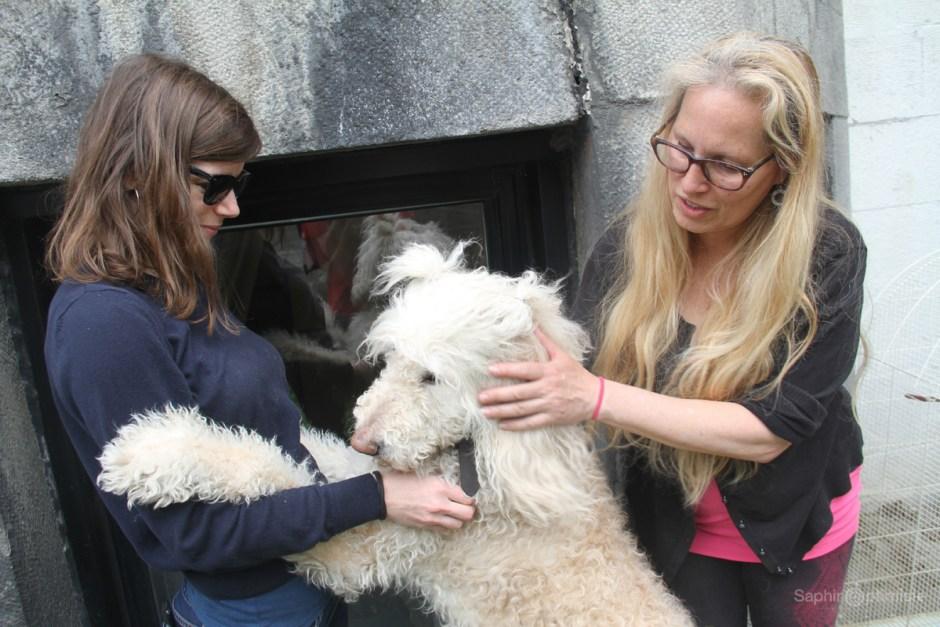 photoptimiste reportage 100en1jour dogs canine chiens franck billaud photo