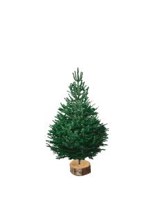 nordmann 100-125 V3 sapin bio de Noël