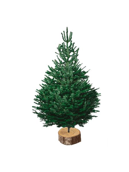 nordmann 150-175 V2 sapin bio de Noël