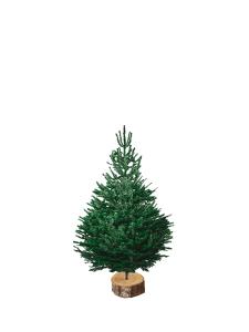 nordmann 100-125 sapin bio de Noël