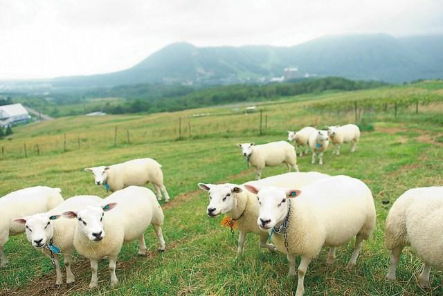 ekonahito羊 1