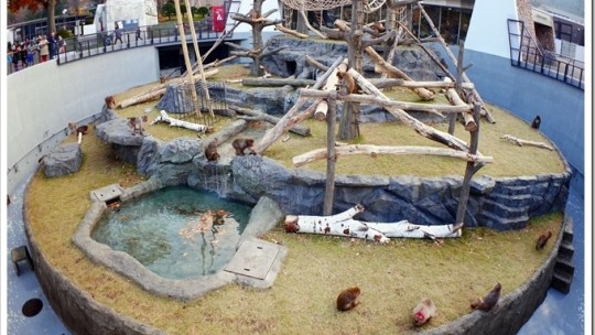 札幌市円山動物園2015年10月24日リニューアルオープン、緑と木のナチューラルなサル山が誕生