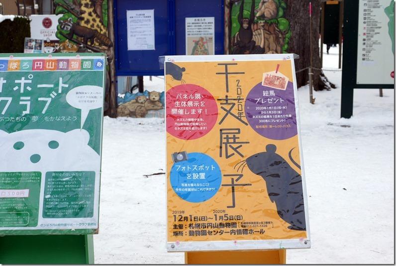 札幌観光おすすめスポット、みどころいっぱいの円山動物園へ、毎年恒例の干支展、来年はねずみ年2019年最終営業は28日土曜日、クリスマスの25日も休みです。加藤園長のもと、動物に優しい動物園へ改革中