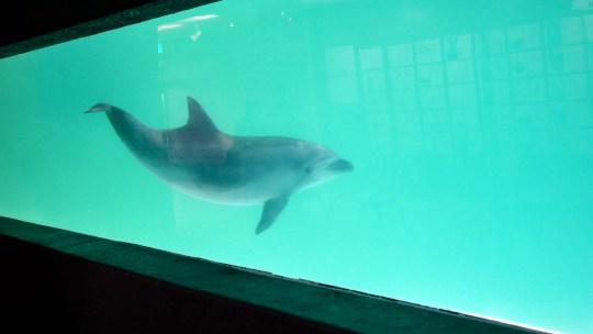 昭和の懐かしさもいっぱい小樽水族館へ、50年前と変わらぬ入り口、カニ展も開催中