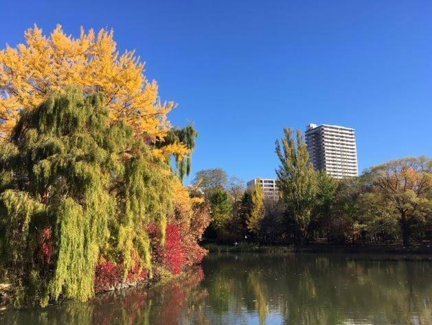 中島公園紅葉