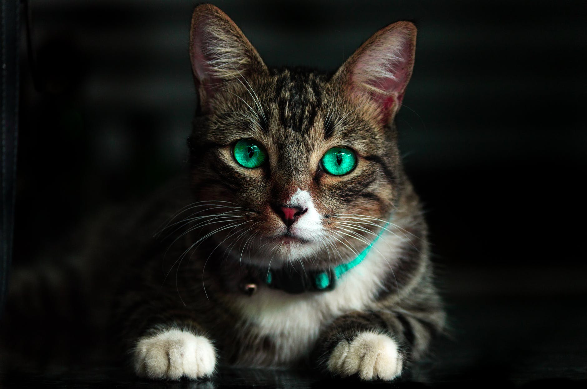 "Photo by Kelvin Valerio on <a href=""https://www.pexels.com/photo/adorable-animal-blur-cat-617278/"" rel=""nofollow"">Pexels.com</a>"