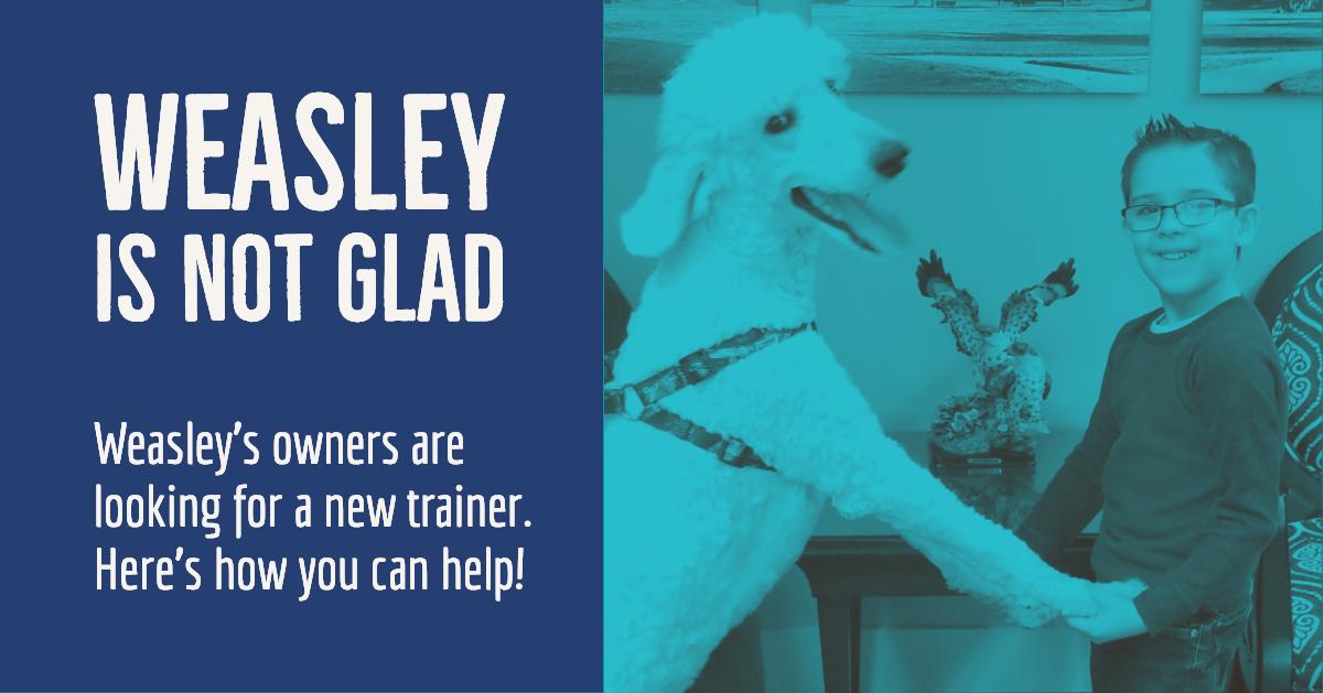 weasley-is-not-glad
