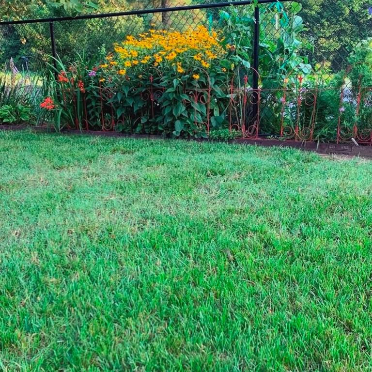 Creek County Master Gardener: Summer Lawns
