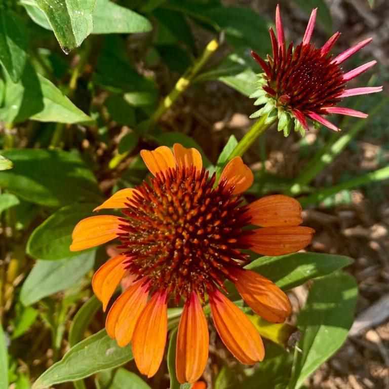 Creek County Master Gardener: Seed Propagation Methods