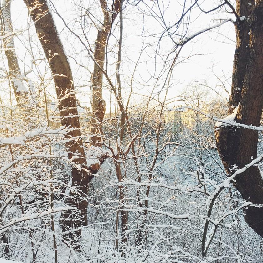 snö och sol i vitabergsparken