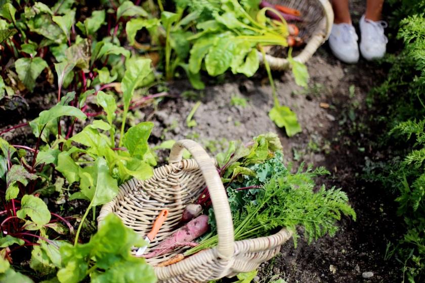 vegetarisk buffé & självplock på ulriksdals slottsträdgård