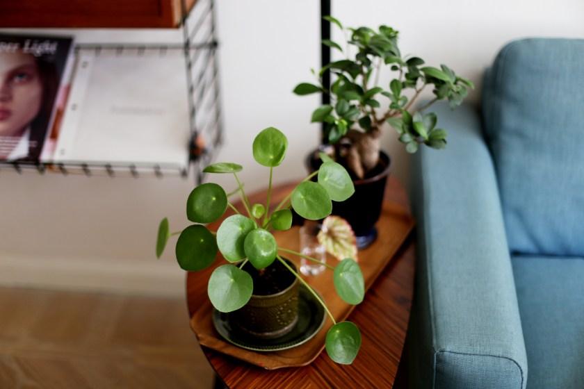 det gröna i vårt hem13