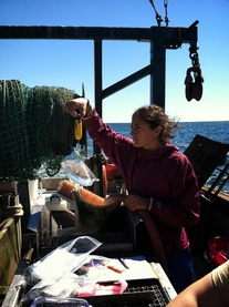 Taking water samples on a boat out in Narragansett Bay.