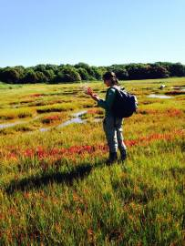 Falling in love with marsh plants