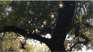 light pic 2