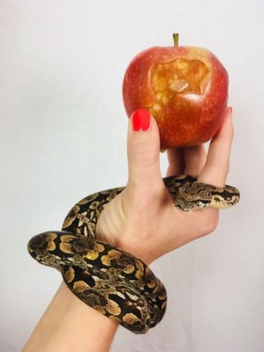 Good Job, Snake!